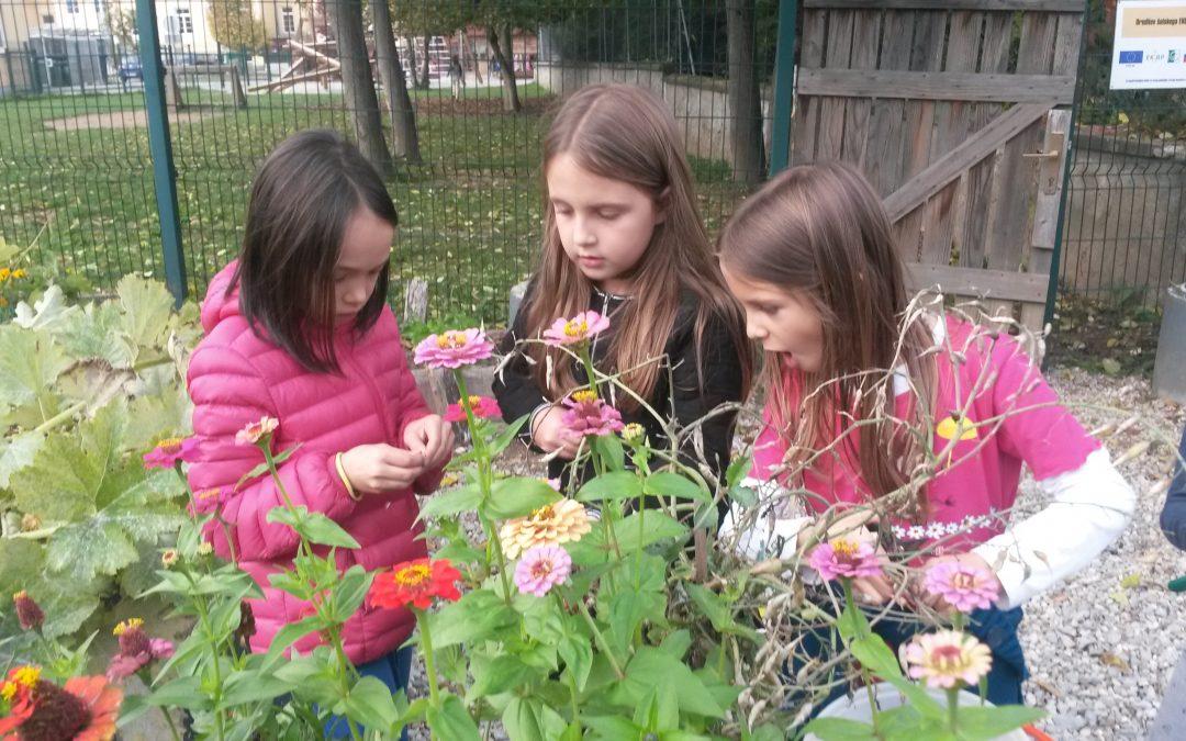 Kaj smo letos že delali pri vrtnarskem krožku?