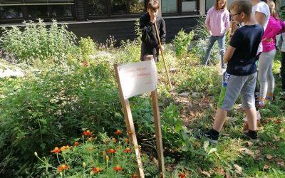 Tedni vseživljenjskega učenja TVU – jesenska opravila na zeliščnem vrtu